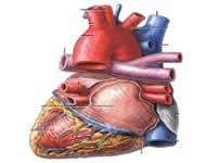 srčane-aritmije