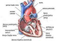 Bolest_srcanih_zalistaka