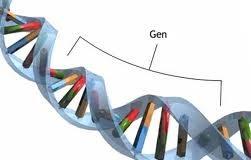Osnovni_genotoksicni_testovi