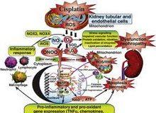 tubulointersticijumska-nefropatija-izazvana-lekovima