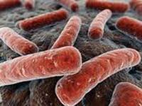Bacteroides-fragilis