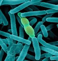 bacillus-anthracis