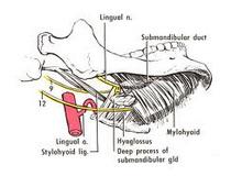 pelveoperitonitis-genitalnog-porekla