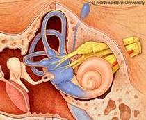Timpanoskleroza