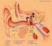 otospongiosis