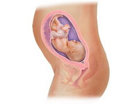 28-nedelja-trudnoce