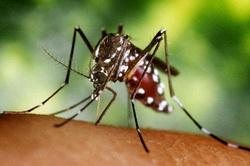 zika-virusna-infekcija