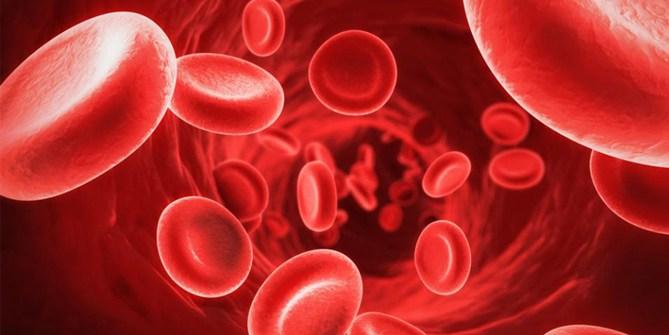 darkfield-analiza-krvi
