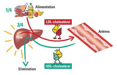 Šta je holesterol?